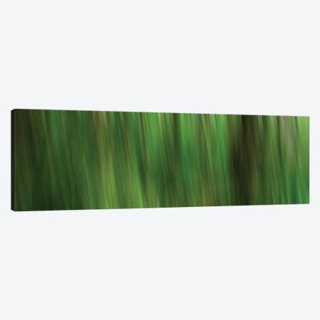 Tree Motion Canvas Print #SVN54} by Savanah Plank Canvas Artwork