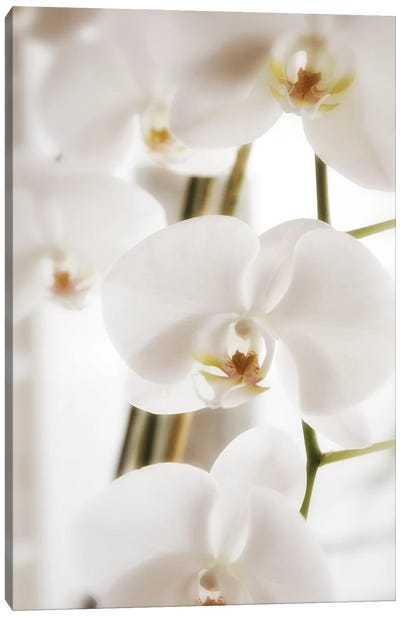 White Orchid Flowers Canvas Art Print