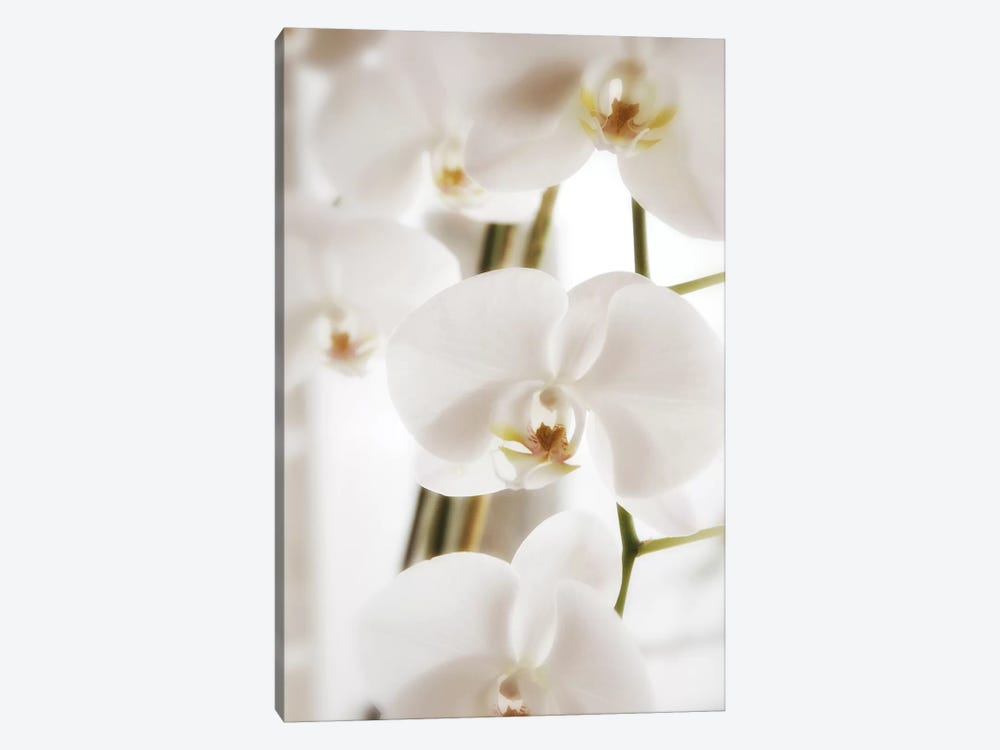 White Orchid Flowers by Savanah Plank 1-piece Art Print