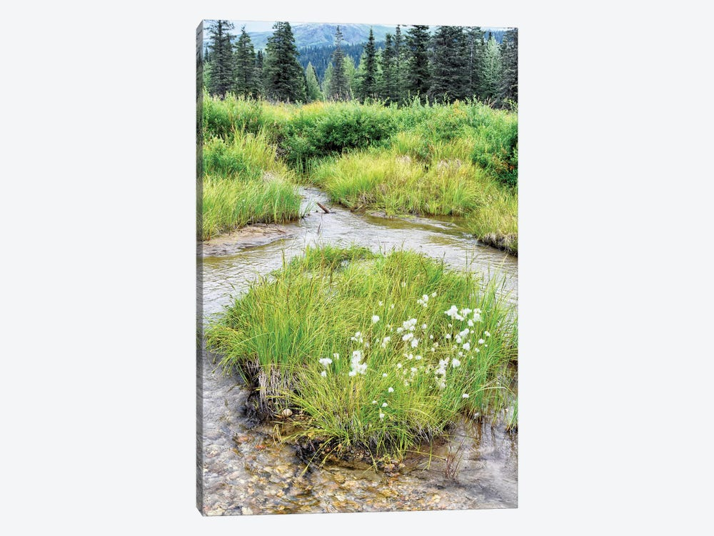 Alaska Marshland by Savanah Plank 1-piece Canvas Artwork