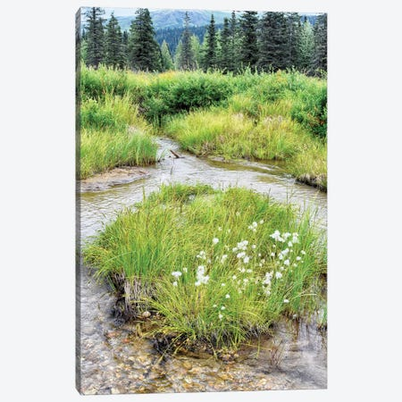 Alaska Marshland Canvas Print #SVN65} by Savanah Plank Art Print