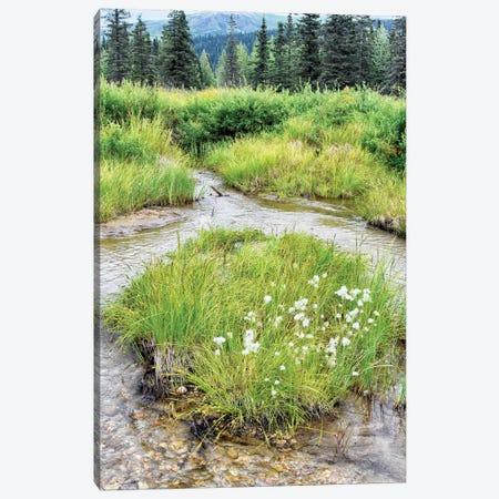 Alaska Marshland Canvas Print #SVN65} by Savanah Plank Art Print