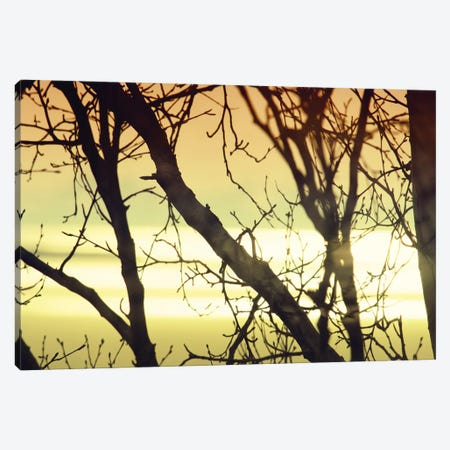 Aspen Sunset I Canvas Print #SVN66} by Savanah Plank Canvas Print