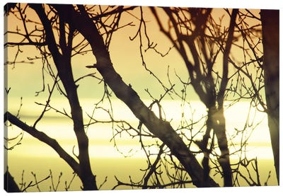 Aspen Sunset I Canvas Art Print