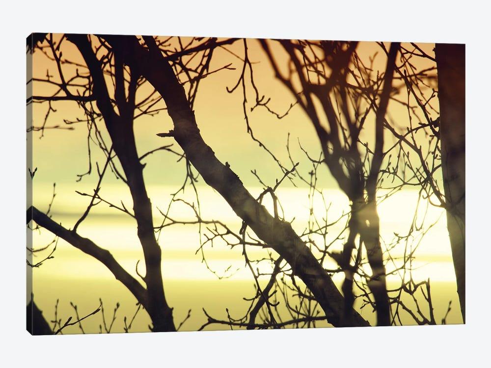 Aspen Sunset I by Savanah Plank 1-piece Canvas Print