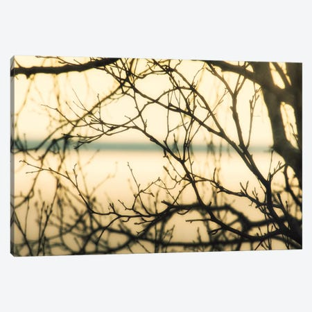 Aspen Sunset II Canvas Print #SVN67} by Savanah Plank Canvas Print
