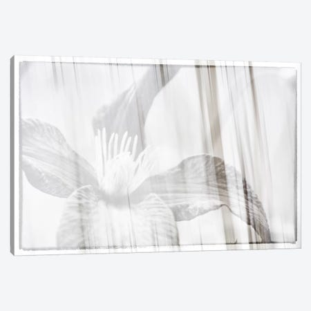 Black And White Clematis Canvas Print #SVN68} by Savanah Plank Canvas Wall Art