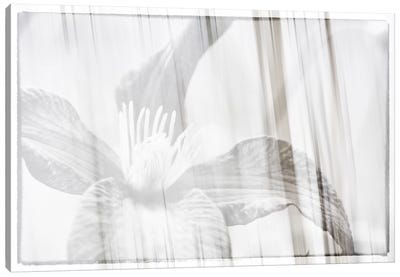 Black And White Clematis Canvas Art Print