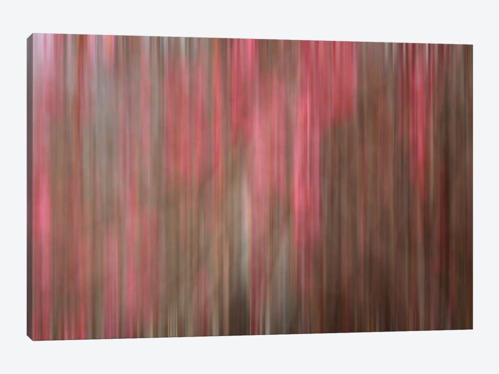 Crabapple Tree Blossoms by Savanah Plank 1-piece Canvas Artwork
