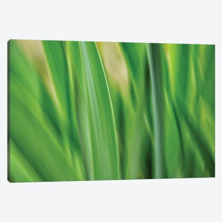 Flora Blades Canvas Print #SVN72} by Savanah Plank Canvas Print