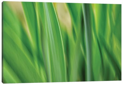 Flora Blades Canvas Art Print