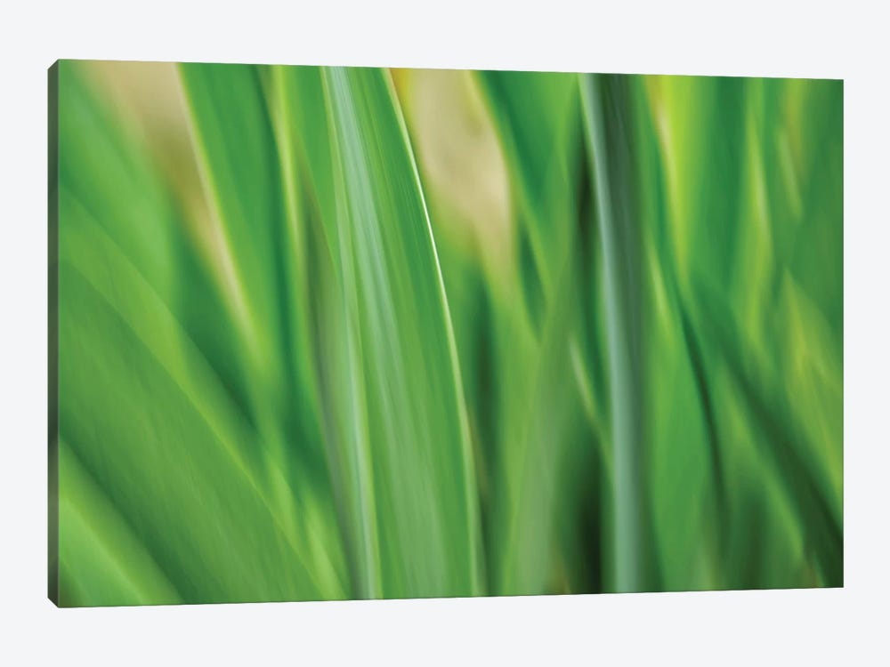 Flora Blades by Savanah Plank 1-piece Canvas Wall Art
