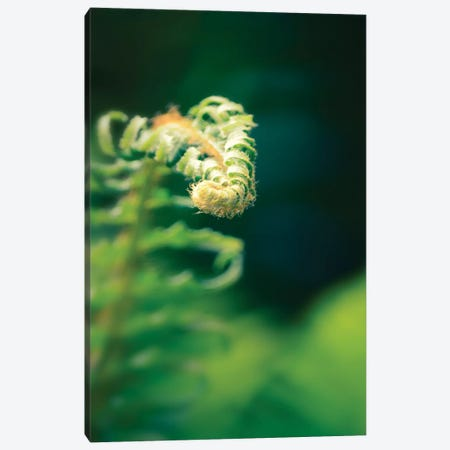 Garden Fern, Vertical Canvas Print #SVN74} by Savanah Plank Canvas Wall Art