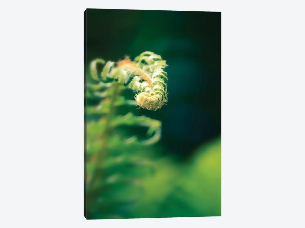 Garden Fern, Vertical by Savanah Plank 1-piece Canvas Artwork