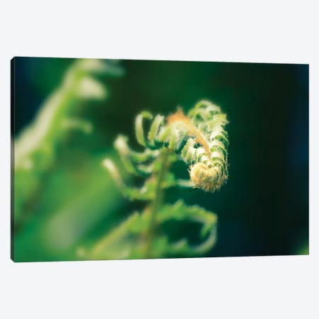 Garden Fern, Horizontal 3-Piece Canvas #SVN75} by Savanah Plank Canvas Artwork