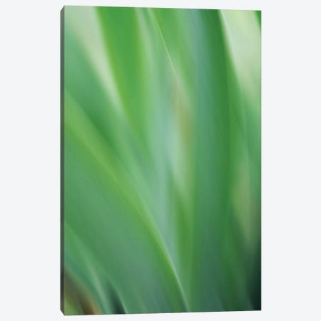 Green Flora Motion Canvas Print #SVN77} by Savanah Plank Canvas Art