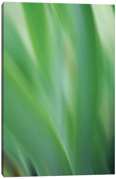 Green Flora Motion Canvas Art Print