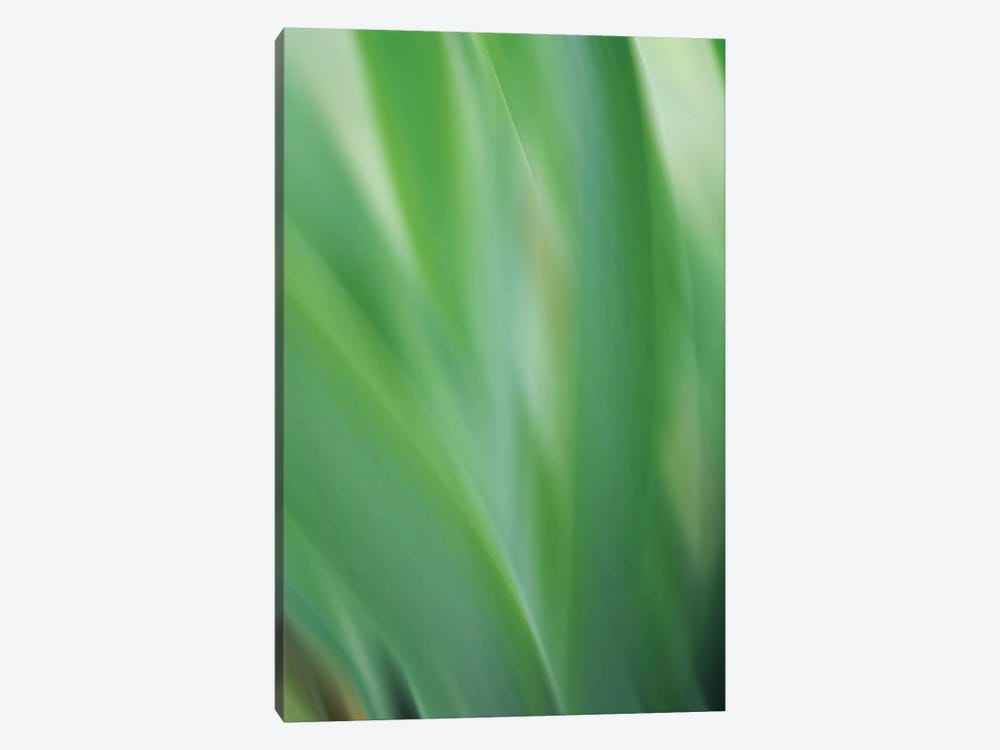Green Flora Motion by Savanah Plank 1-piece Canvas Print