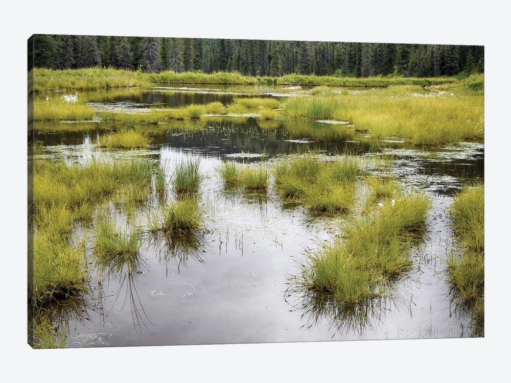 Hatcher's Pass Creek Marsh by Savanah Plank 1-piece Canvas Artwork
