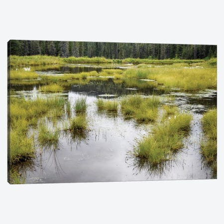 Hatcher's Pass Creek Marsh Canvas Print #SVN78} by Savanah Plank Art Print