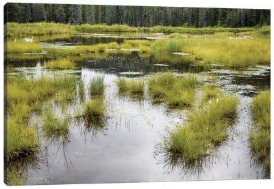 Hatcher's Pass Creek Marsh Canvas Art Print