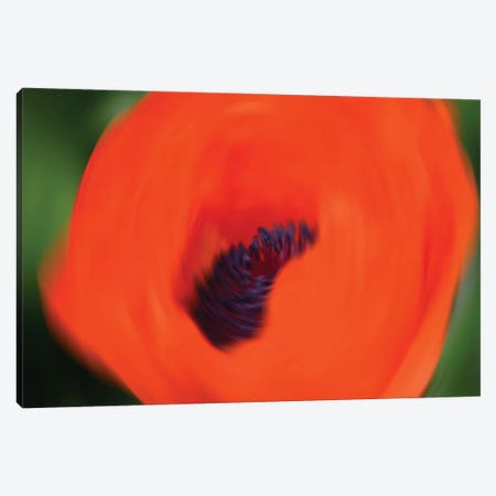 Orange Poppy Canvas Print #SVN79} by Savanah Plank Art Print