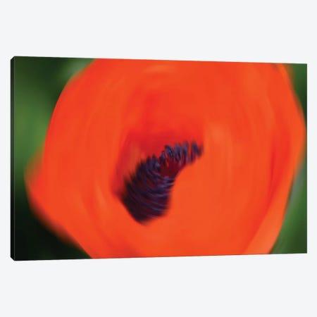 Orange Poppy Canvas Print #SVN79} by Savanah Plank Art Print