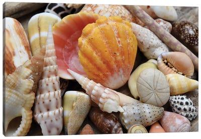 Tropical Shell Still-Life Canvas Art Print