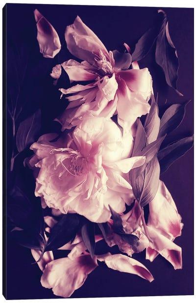 Peonies Bouquet IV Canvas Art Print