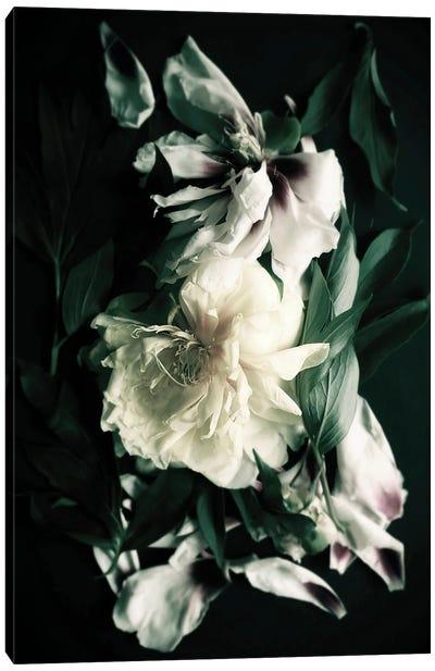 Peonies Bouquet VII Canvas Art Print