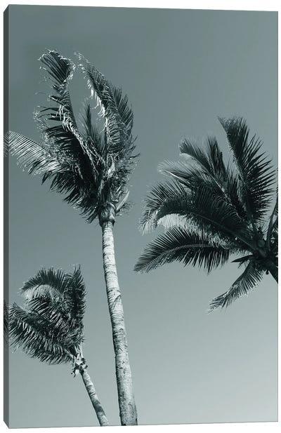 Palms I Canvas Art Print