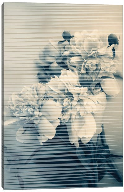 Peonies Bouquet II Canvas Art Print