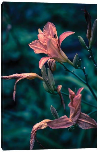 Pink Lilies Canvas Art Print