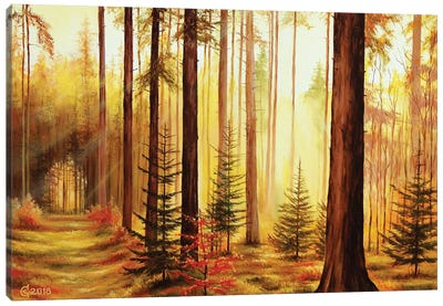 Lights And Shadows Canvas Art Print