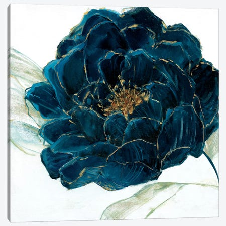 Velvet Bloom Canvas Print #SWA120} by Sally Swatland Canvas Wall Art