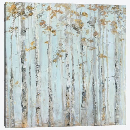 Soft Birch Forest Canvas Print #SWA150} by Sally Swatland Canvas Print
