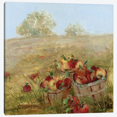 Apple Picking I Canvas Print #SWA18} by Sally Swatland Canvas Art Print