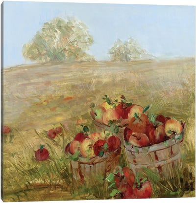 Apple Picking I Canvas Art Print
