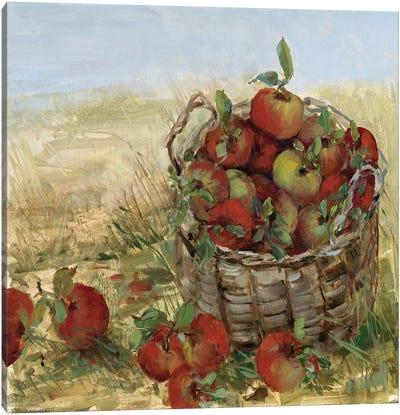 Apple Picking II Canvas Art Print