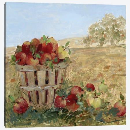 Apple Picking III Canvas Print #SWA20} by Sally Swatland Canvas Art