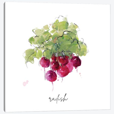 Sketch Kitchen Radish Canvas Print #SWA230} by Sally Swatland Canvas Artwork