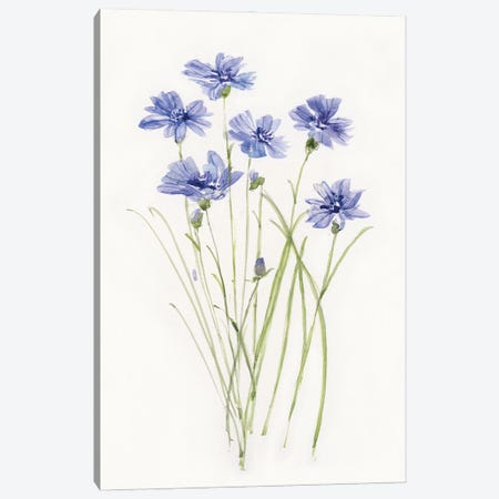 Dainty Botanical Cornflower Canvas Print #SWA245} by Sally Swatland Canvas Wall Art