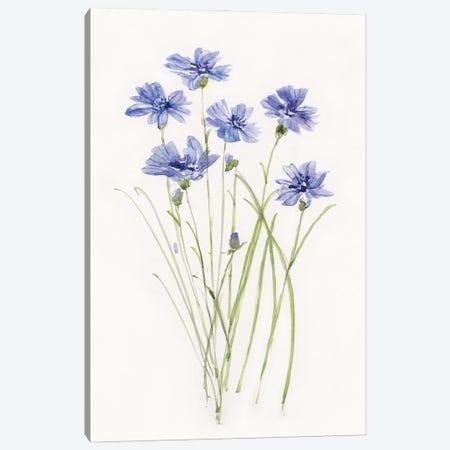 Dainty Botanical Cornflower Canvas Print #SWA245} by Sally Swatland Canvas Wall Art