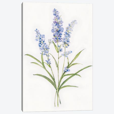Dainty Botanical Lavender 3-Piece Canvas #SWA246} by Sally Swatland Canvas Artwork