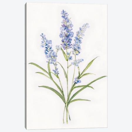 Dainty Botanical Lavender Canvas Print #SWA246} by Sally Swatland Canvas Artwork