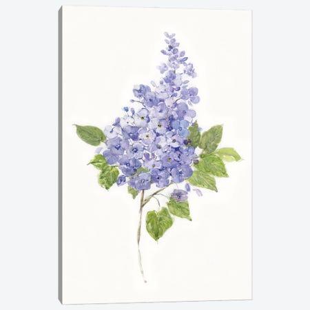 Dainty Botanical Lilac Canvas Print #SWA247} by Sally Swatland Canvas Art