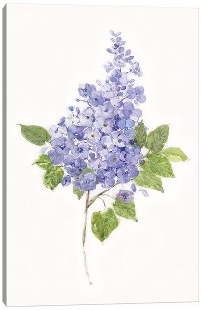 Dainty Botanical Lilac Canvas Art Print