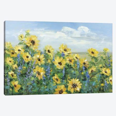 Sunflower Fields Forever Canvas Print #SWA257} by Sally Swatland Art Print