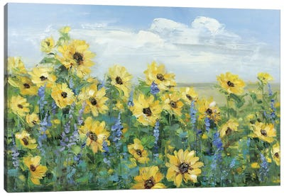 Sunflower Fields Forever Canvas Art Print