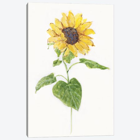 Sunflower I Canvas Print #SWA258} by Sally Swatland Canvas Wall Art